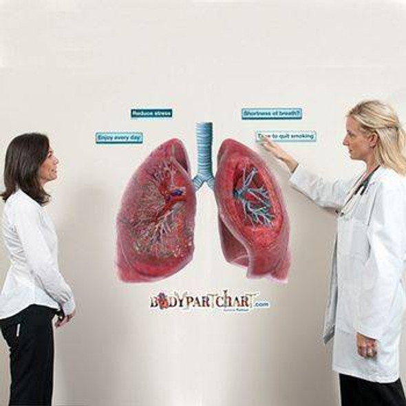 Cross Section of the Lungs Anatomy Dry-Erase Sticky Wall Chart - 54 in x 40 in