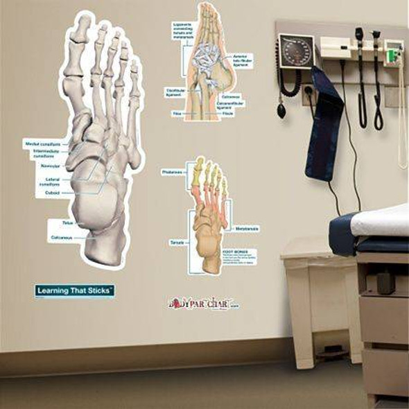 Ankle and Foot Labeled Anatomy Dry-Erase Sticky Wall Chart