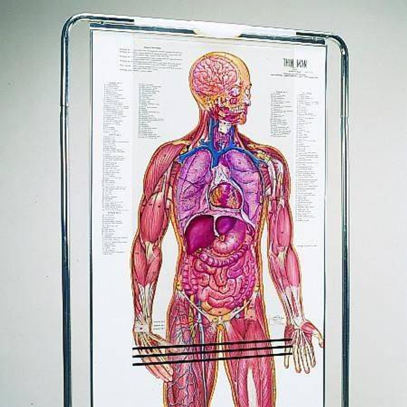 The Thin Man Sequential Human Anatomy Figure 1