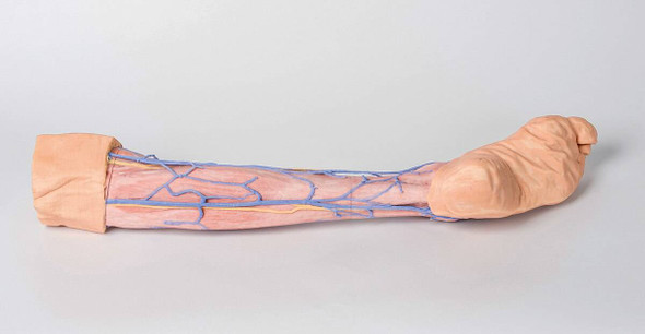 3D Printed Lower Limb Superficial Veins 1