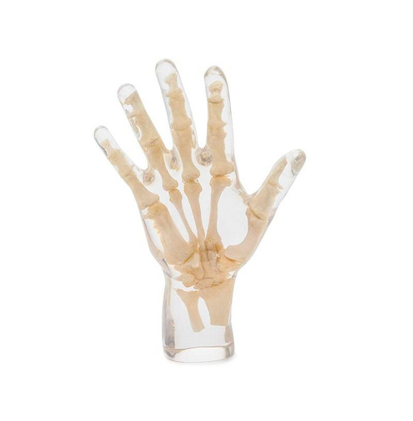 X-Ray Phantom Hand, Transparent 1
