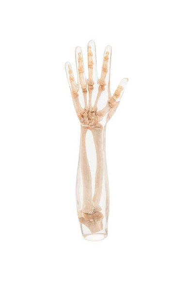 X-Ray Phantom Lower Arm, Transparent
