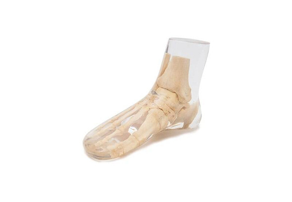 X-Ray Phantom Foot, Transparent 1