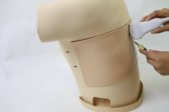 Anatomy Lab Thoracentesis Ultrasound Training Model 1