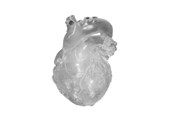 Heart Model, Professional, Clear