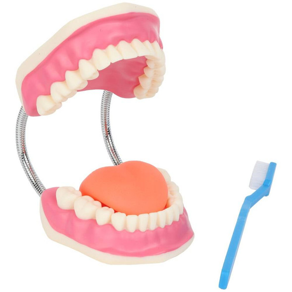 Axis Scientific Tooth Brushing Model, 3 Times Enlarged with Giant Brush