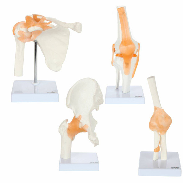 Axis Scientific Functional Joint Anatomy Model Set