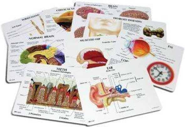 Anatomical Education Card Set