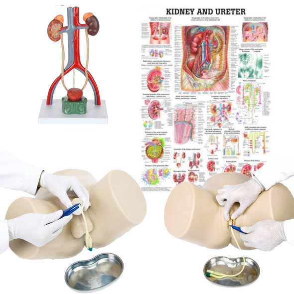 Dual Sex Catheter Trainer and Urinary System Kit with all components