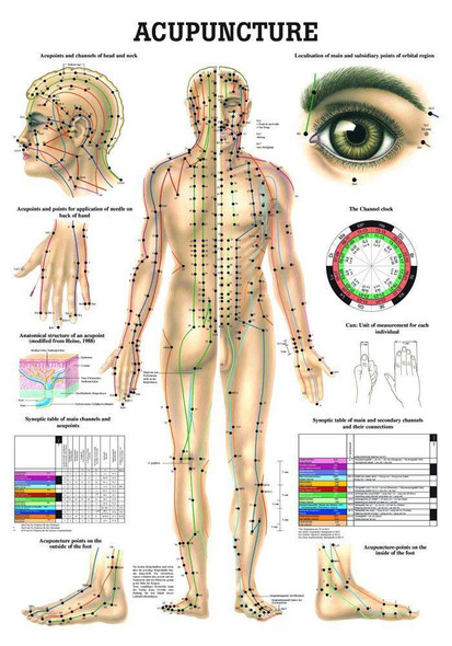 Human Acupuncture Laminated Chart