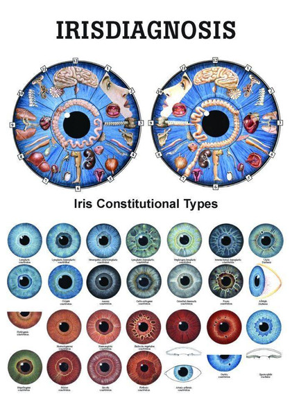 Iridology Laminated Chart