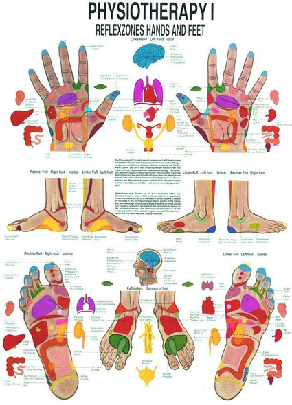 Reflexes of the Hand and Foot Laminated Anatomy Chart