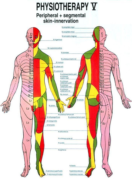 Peripheral and Segmental Skin Innervation Laminated Chart