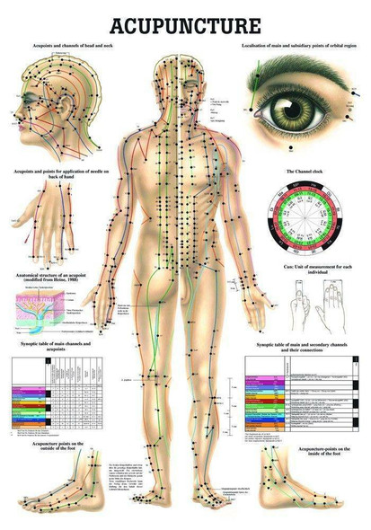 Human Acupuncture Laminated Chart Acupunctura Del Cuerpo in Spanish