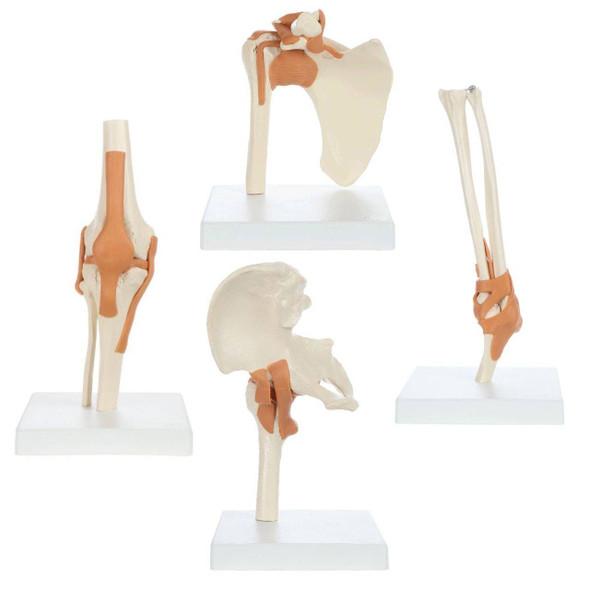 Rudiger Anatomie Premium Functional Joint Anatomy Model Set