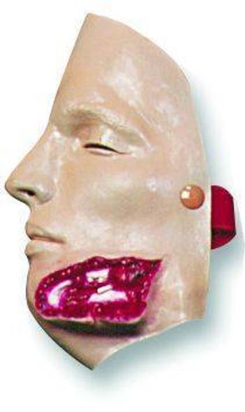 Bleeding Jaw Wound Model