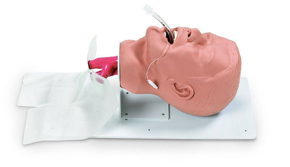 Economy Adult Airway Management Trainer Simulator