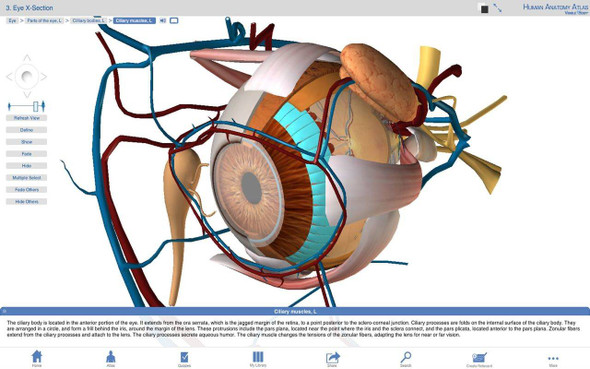 Visible Body Human Anatomy Software PC or Mac Download 1