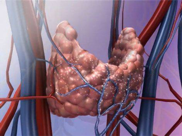Visible Body Human Physiology Animations Software PC or Mac Download