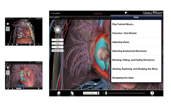 Visible Body Human Heart and Circulatory Premium Software PC or Mac Download 1