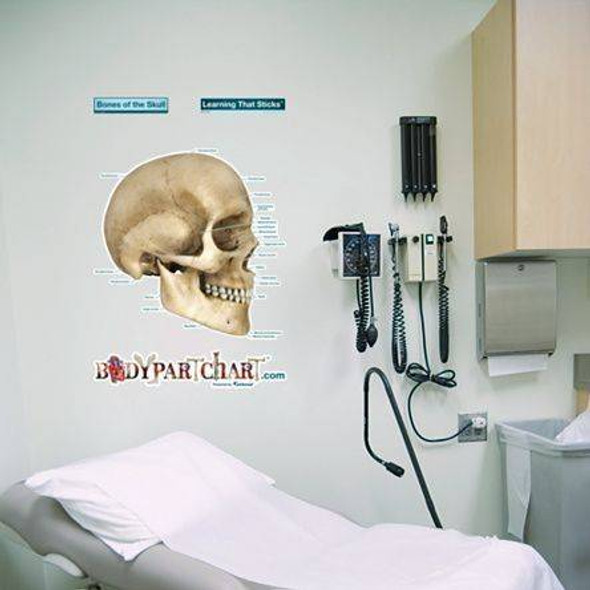 Skull Labeled Anatomy Dry-Erase Sticky Wall Chart - 27 in x 40 in