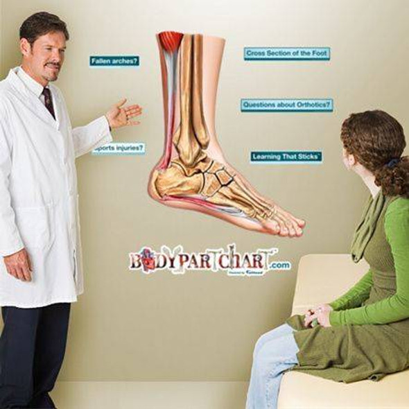 Cross Section of the Foot Anatomy Dry-Erase Sticky Wall Chart - 24 in x 30 in