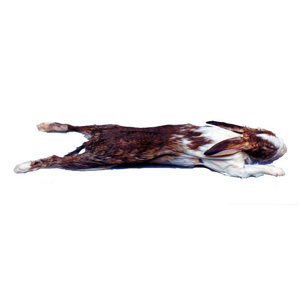 Anatomy Lab Rabbit Specimen, 14 or More Inches, Double Injection, Vacuum Packed