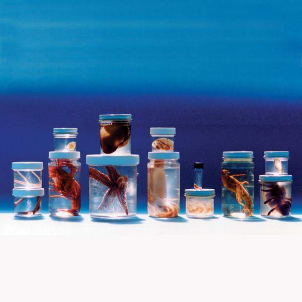 Anatomy Lab Comparative Invertebrate Set of 13 Specimens