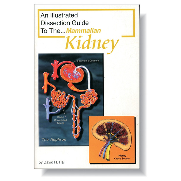 Anatomy Lab Mammal Kidney Dissection Guide