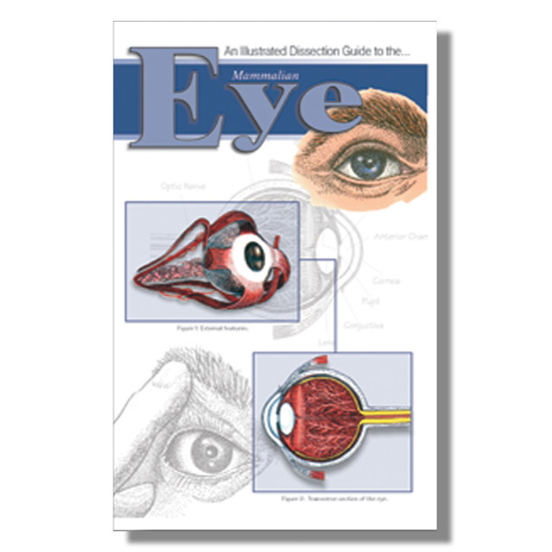 Anatomy Lab Mammal Eye Dissection Guide