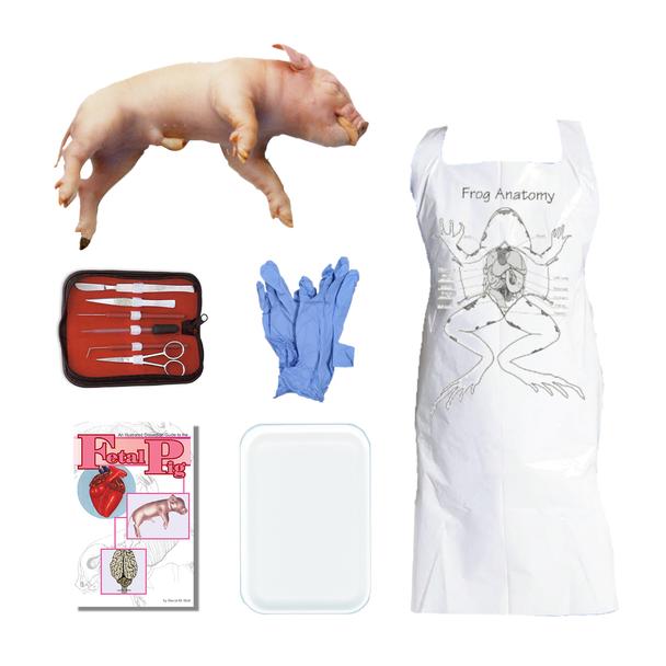 Fetal Pig Dissection Kit