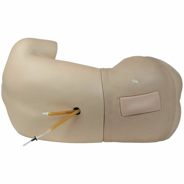 Anatomy Lab Adult Lumbar Puncture Simulator