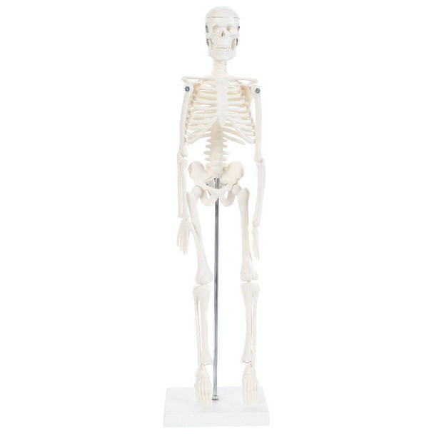 Anatomy Lab Essential Micro Desktop Skeleton