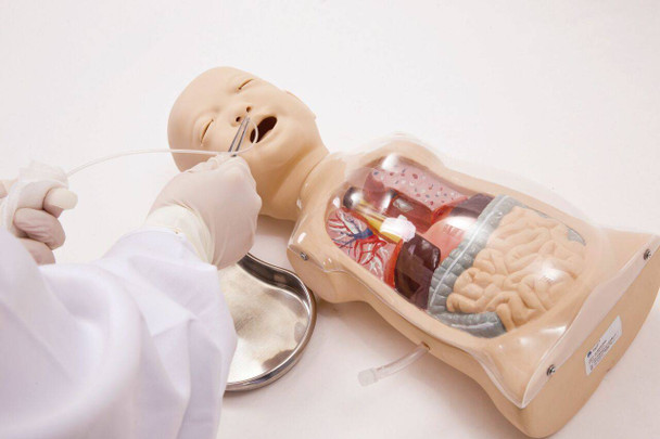 Anatomy Lab Infant Transparent Lavage Model