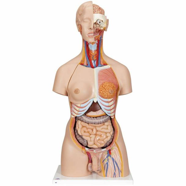 Deluxe Dual-Sex Human Torso Anatomy Model 28 Part