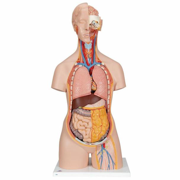 Classic Human Unisex Torso Anatomy Model 18 Parts