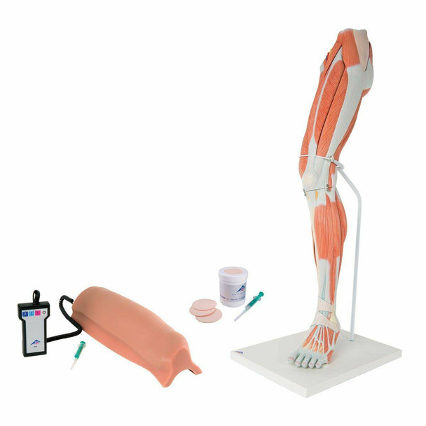 Lower Intramuscular Injection Trainer Kit