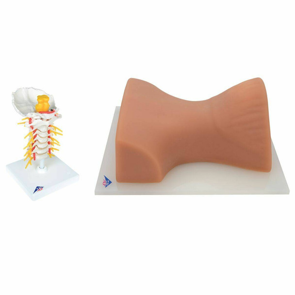 Cervical Spinal Injection Trainer Kit