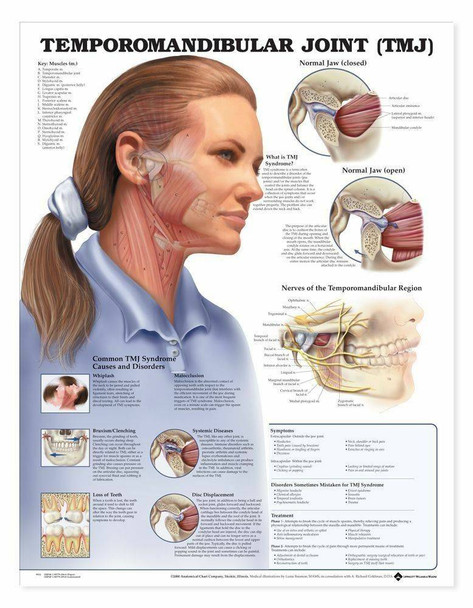 Temporomandibular Joint TMJ Laminated Anatomical Chart
