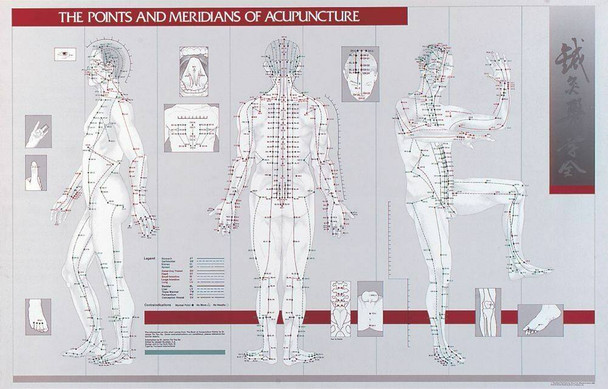 Points and Meridians Of Acupuncture Laminated Chart