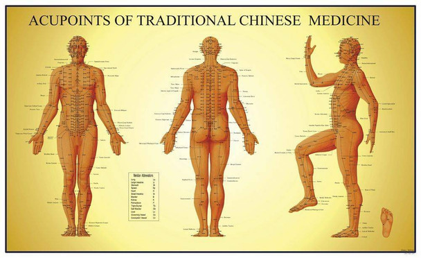 Acupoints Of Traditional Chinese Medicine Male Anatomy Chart