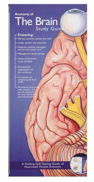 Illustrated Pocket Anatomy - Anatomy Of The Brain Study Guide - 2nd Edition