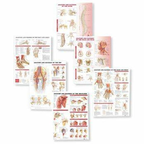 Anatomy and Injuries Laminated Anatomy Chart Set