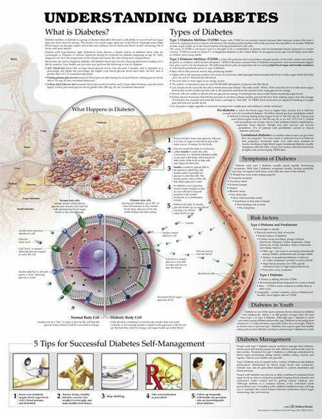 Understanding Diabetes Laminated Anatomical Chart - 3rd Edition
