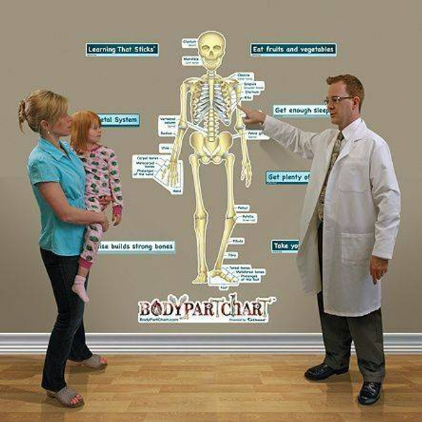 Simplified Skeletal System Anatomy Dry-Erase Sticky Wall Chart - 54 in x 40 in