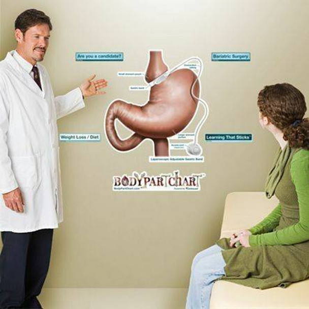 Gastric Lap Band Labeled Dry-Erase Sticky Wall Chart - 27 in x 40 in