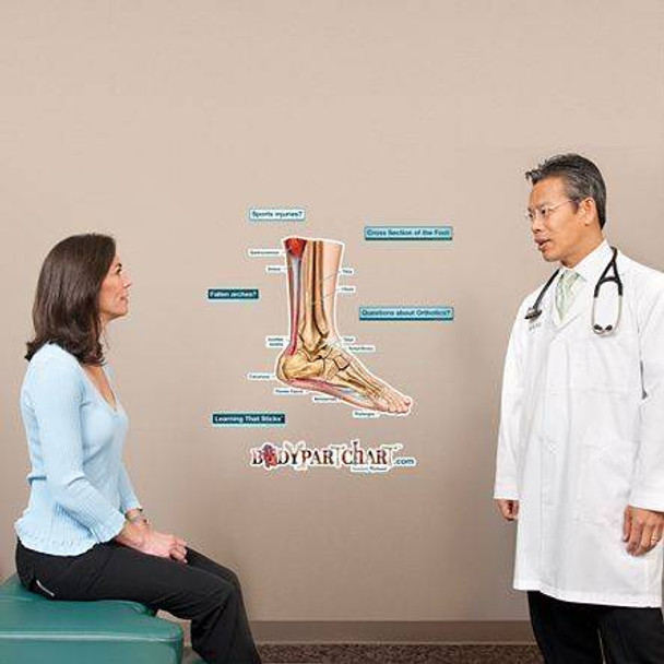 Cross Section of the Foot Labeled Anatomy Dry-Erase Sticky Wall Chart - 27 in x 40 in