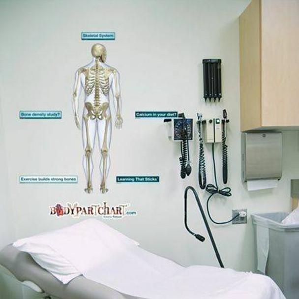 Posterior Skeletal System Anatomy Dry-Erase Sticky Wall Chart