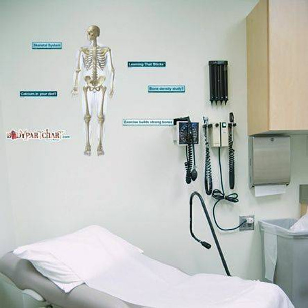 Anterior Skeletal System Labeled Anatomy Dry-Erase Sticky Wall Chart