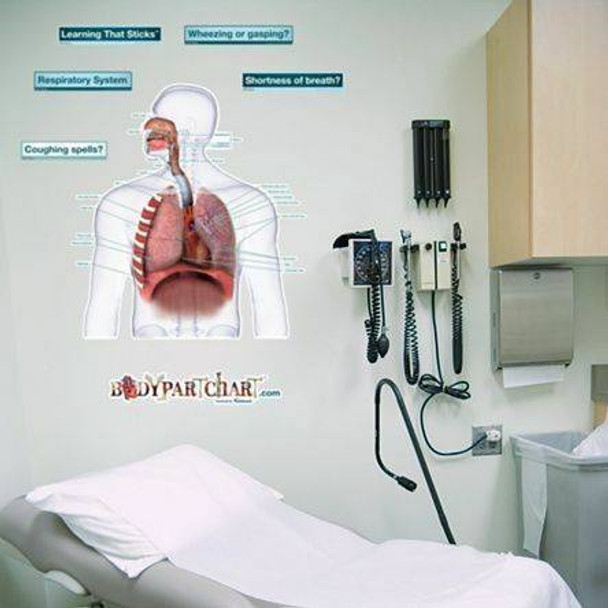 Respiratory System Anatomy Dry-Erase Sticky Wall Chart - Labeled